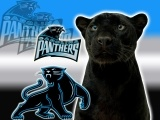 Betting on Panthers football