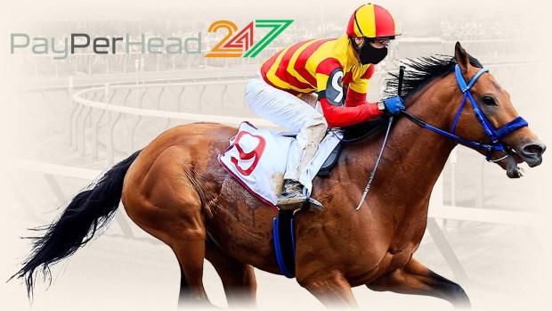 Horse Racing at PPH247