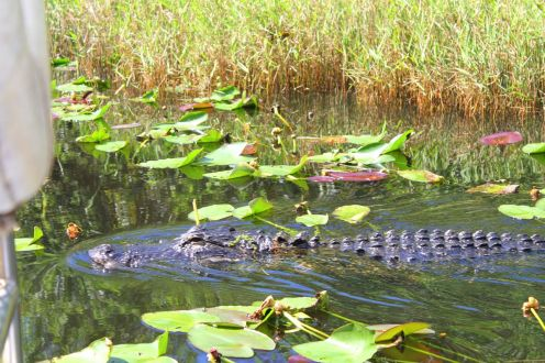 Things to do in Florida: Visiting The Everglades on Hand Luggage Only Blog (2)