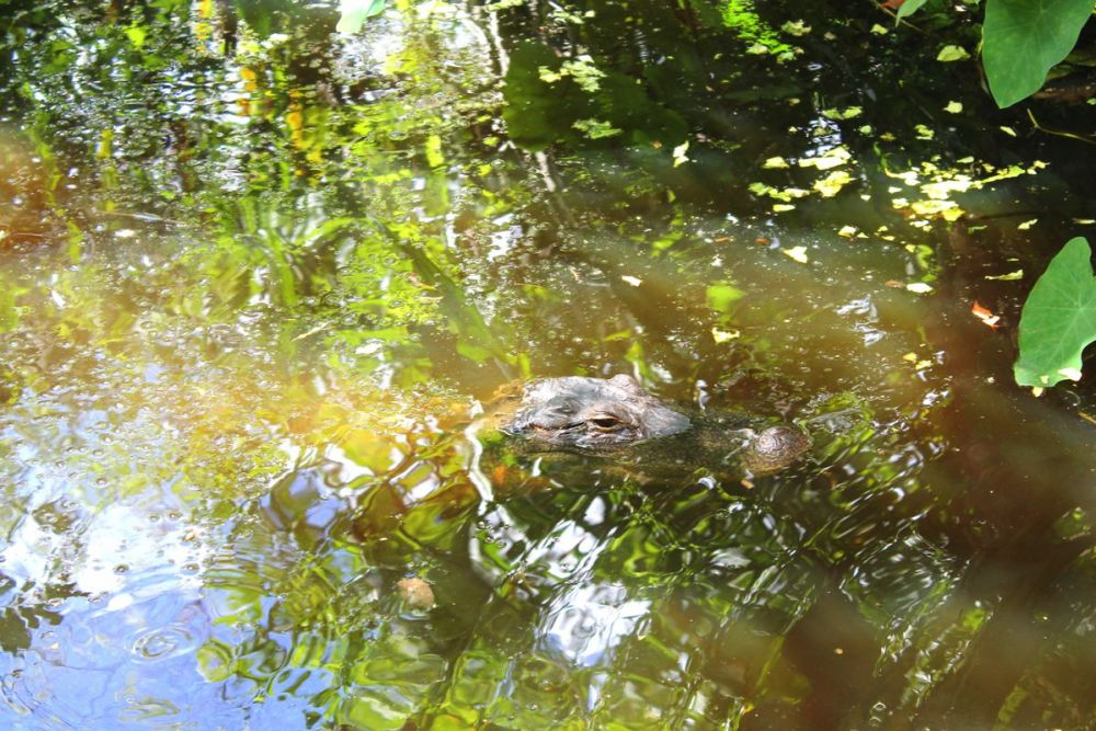 Things to do in Florida: Visiting The Everglades on Hand Luggage Only Blog (9)