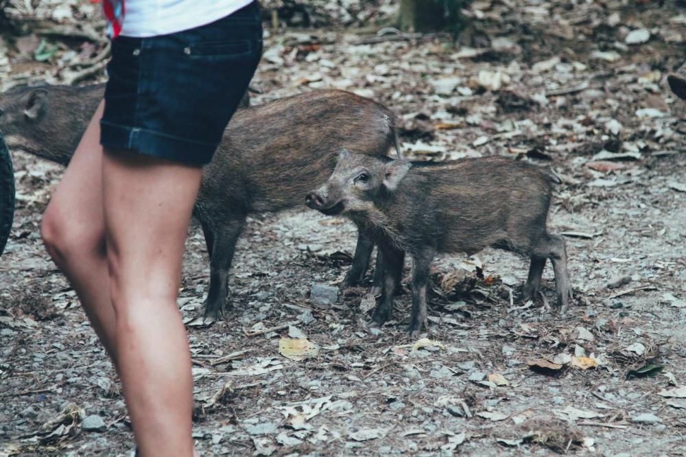 Going Off The Beaten Track in Singapore: Exploring Ubin Island... (5)