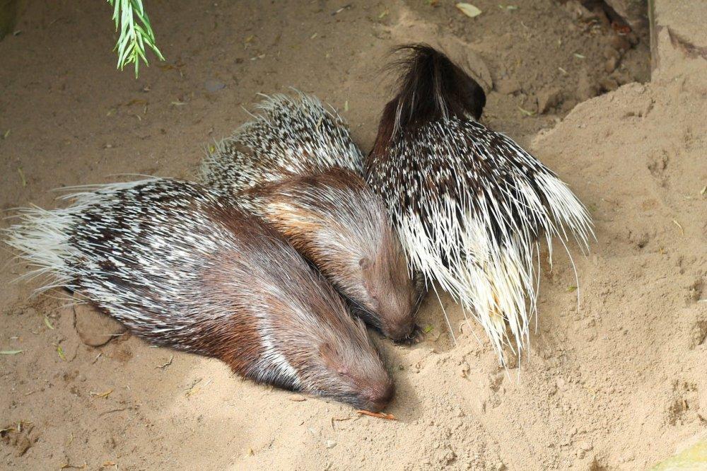 Animals at ZOOM Erlebniswelt Gelsenkirchen, Germany (13)