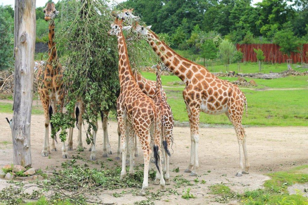 Animals at ZOOM Erlebniswelt Gelsenkirchen, Germany (16)