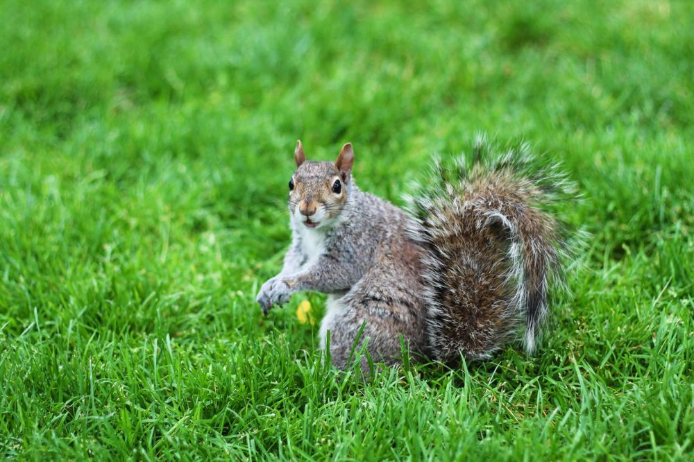 Squirrels, Strawberries And Frozen Yoghurts in Harvard (1)