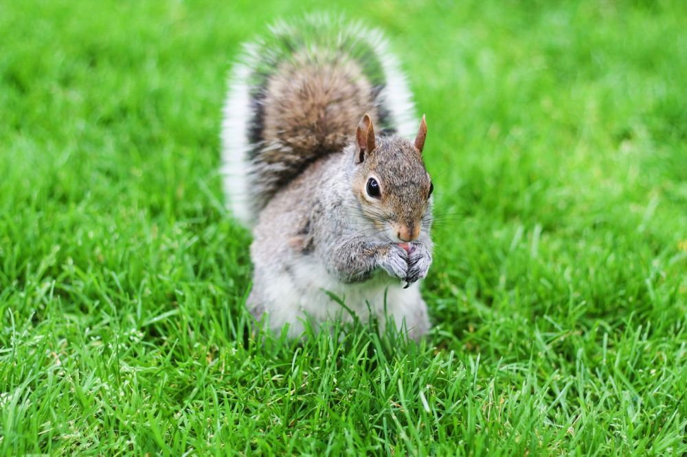 Squirrels, Strawberries And Frozen Yoghurts in Harvard (6)