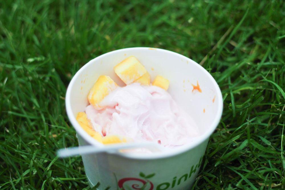 Squirrels, Strawberries And Frozen Yoghurts in Harvard (8)