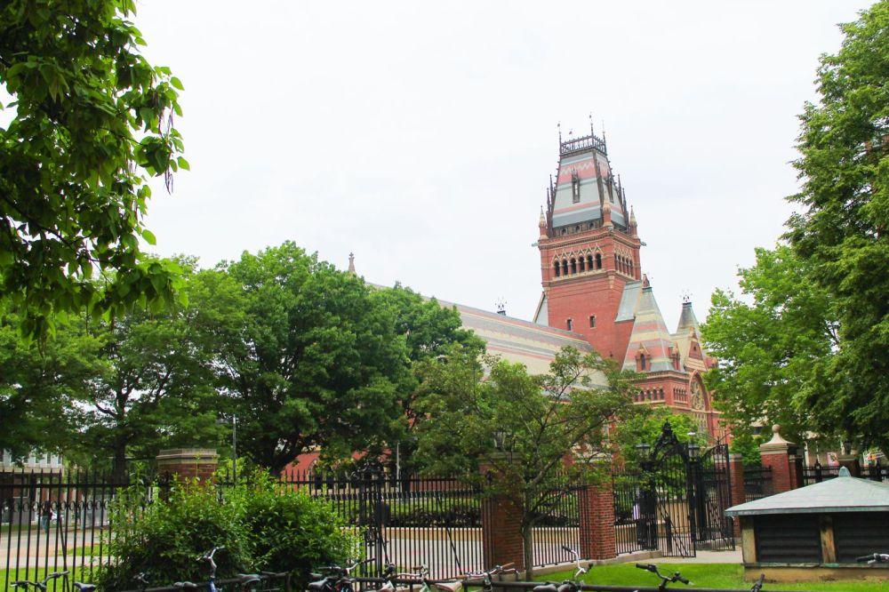Squirrels, Strawberries And Frozen Yoghurts in Harvard (12)