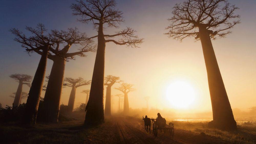 5 Reasons To Visit Madagascar! (2)