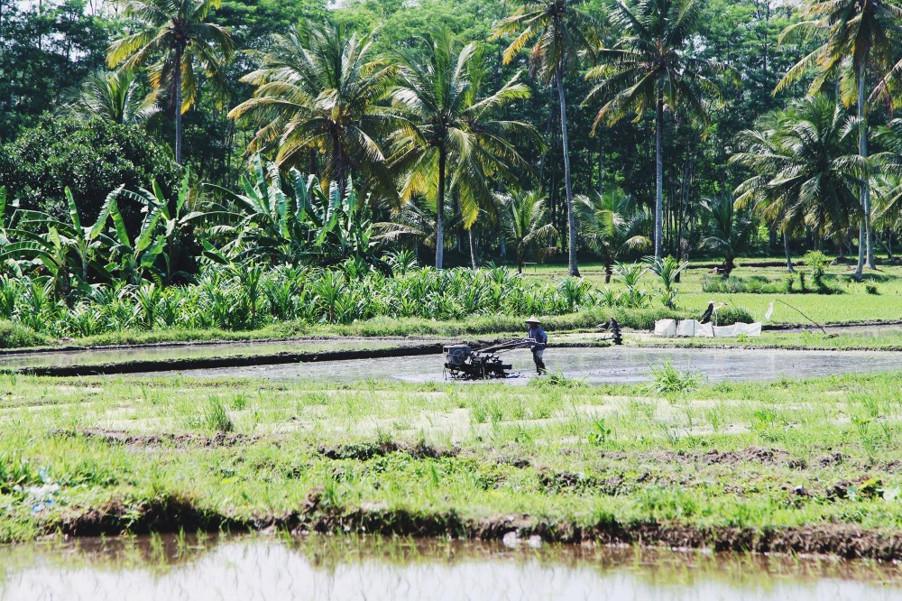 Bali Memories... (5)