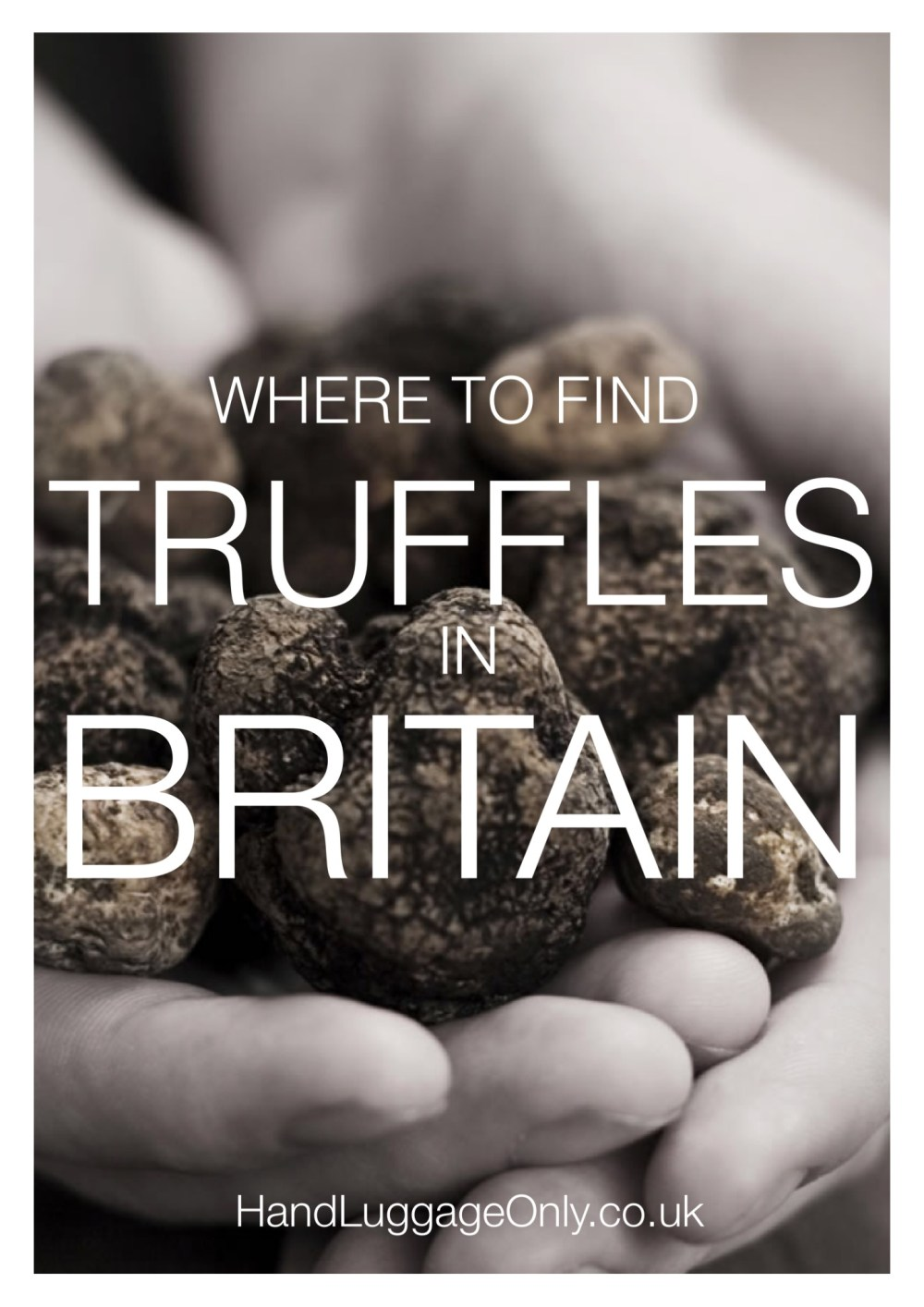 Everyday I'm Truffling: Where To Go Truffle Hunting In Britain (6)
