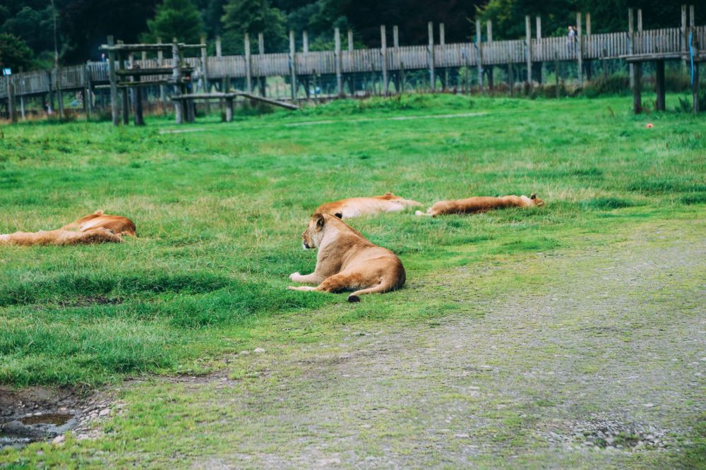 Safari In Scotland - The Photo Diary at Blair Drummond Safari and Adventure Park (4)