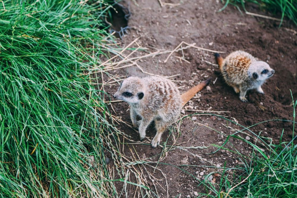 Safari In Scotland - The Photo Diary at Blair Drummond Safari and Adventure Park (16)