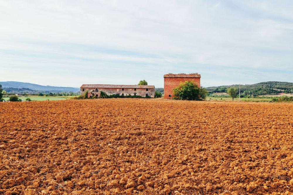 Sunflower Fields... (6)