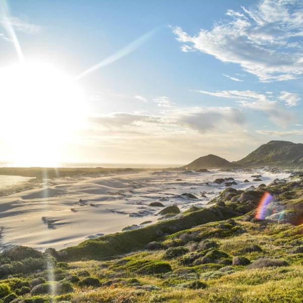 6 Breathtaking Experiences You Must Have Just Outside Of Cape Town, South Africa (4)