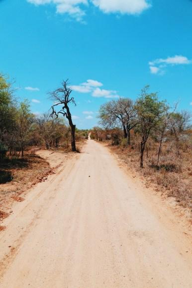 Safari In South Africa - A Photo Diary (21)
