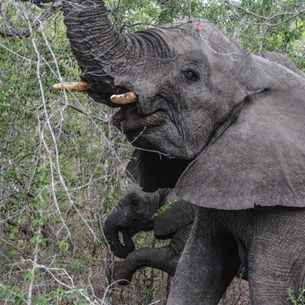 Some Really Important Things You Need To Know About Poaching In Africa (14)