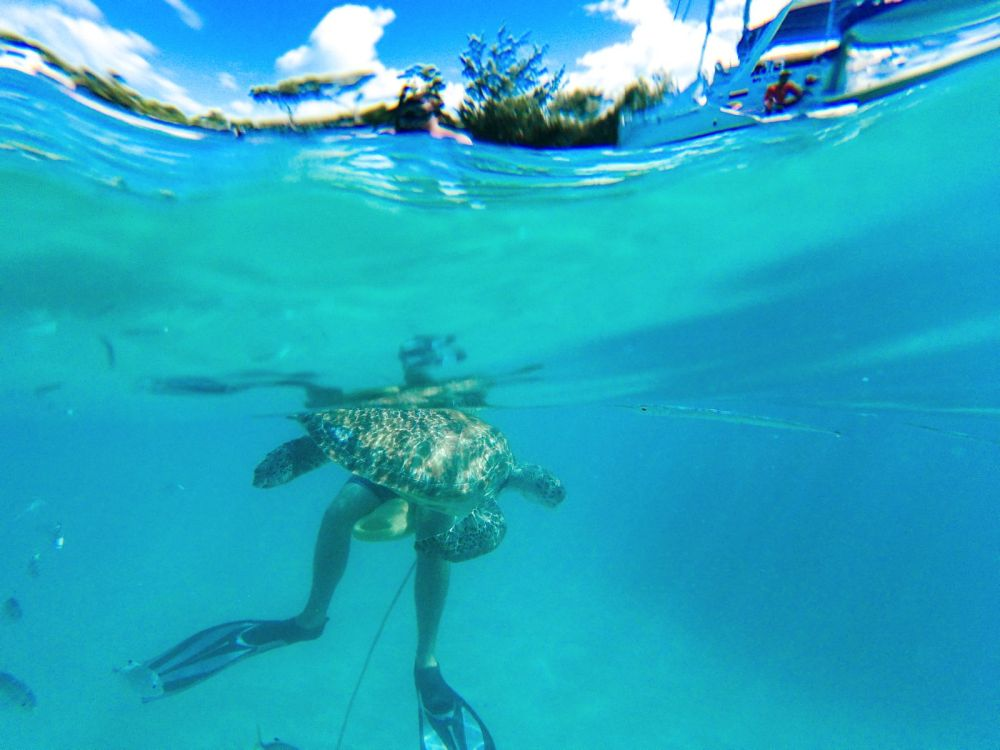 Sailing In Barbados - Swimming With Turtles and Puffer Fish (33)