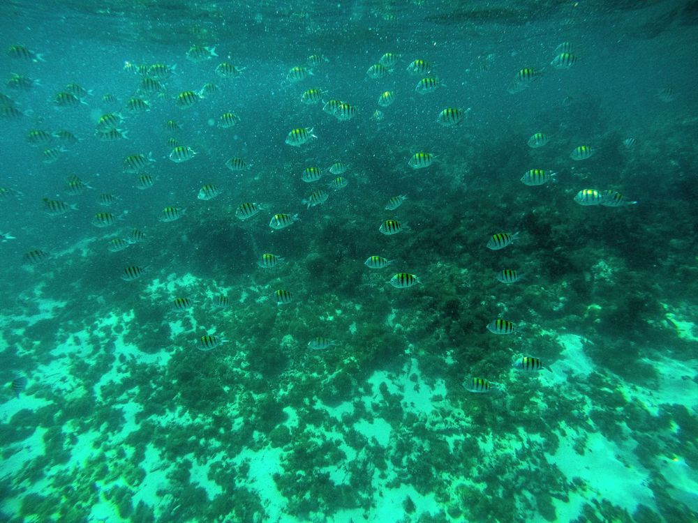 Snorkelling In Antigua - The Photo Diary (12)
