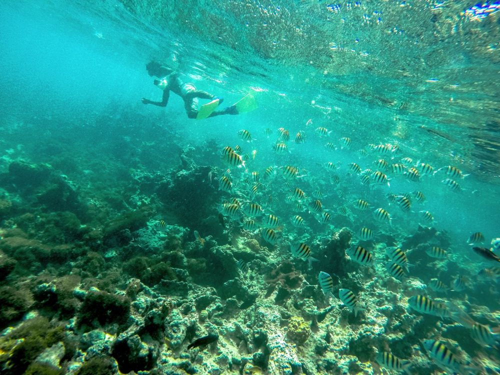 Snorkelling In Antigua - The Photo Diary (5)