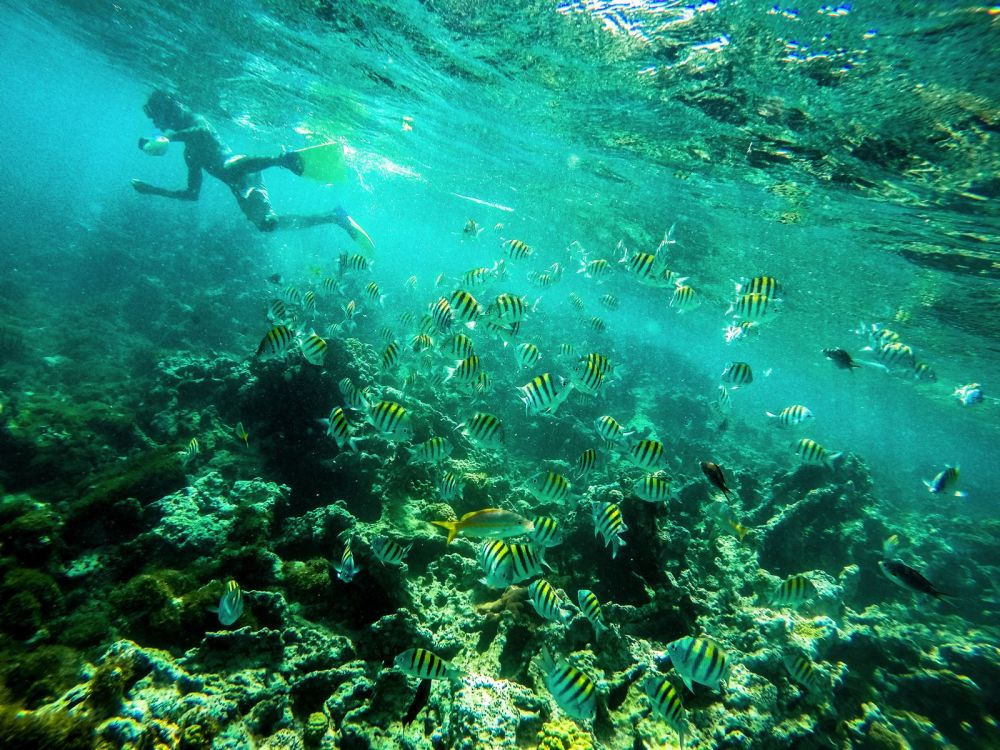 Snorkelling In Antigua - The Photo Diary (15)
