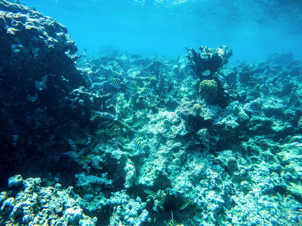 Snorkelling In Antigua - The Photo Diary (13)