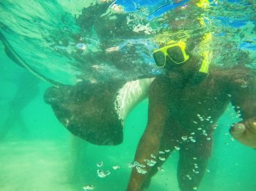 How To Swim With Wild Stingrays In Antigua (19)
