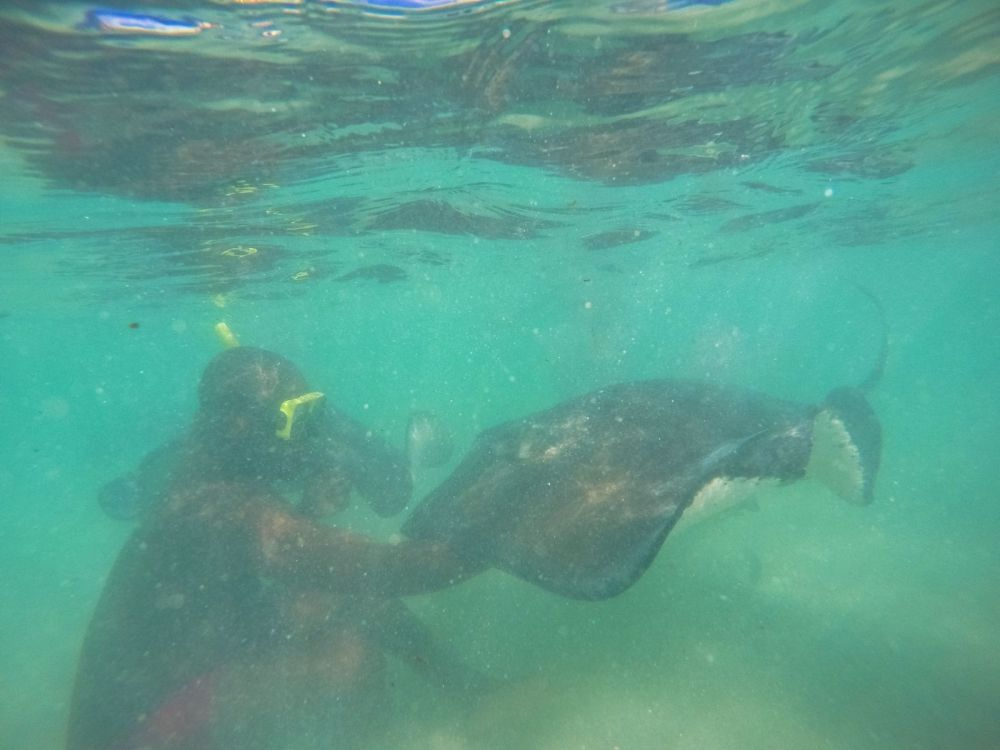 How To Swim With Wild Stingrays In Antigua (15)