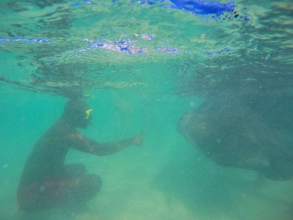 How To Swim With Wild Stingrays In Antigua (13)