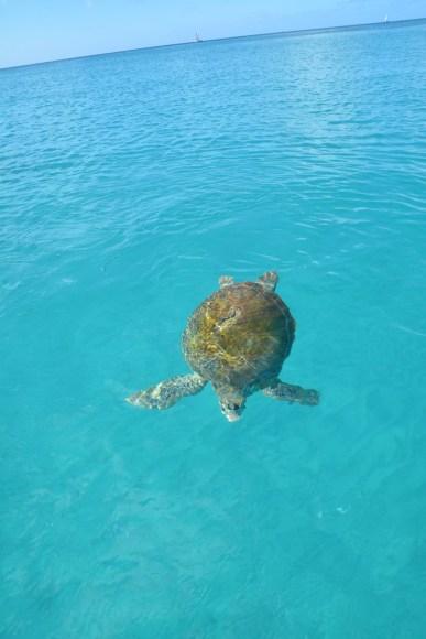 11 Reasons Why You Should Visit Barbados This Year (15)