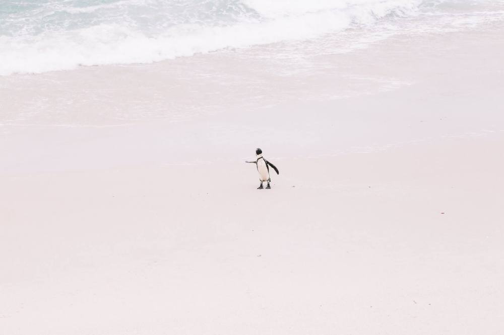 How To Visit Penguin Beach In South Africa (12)