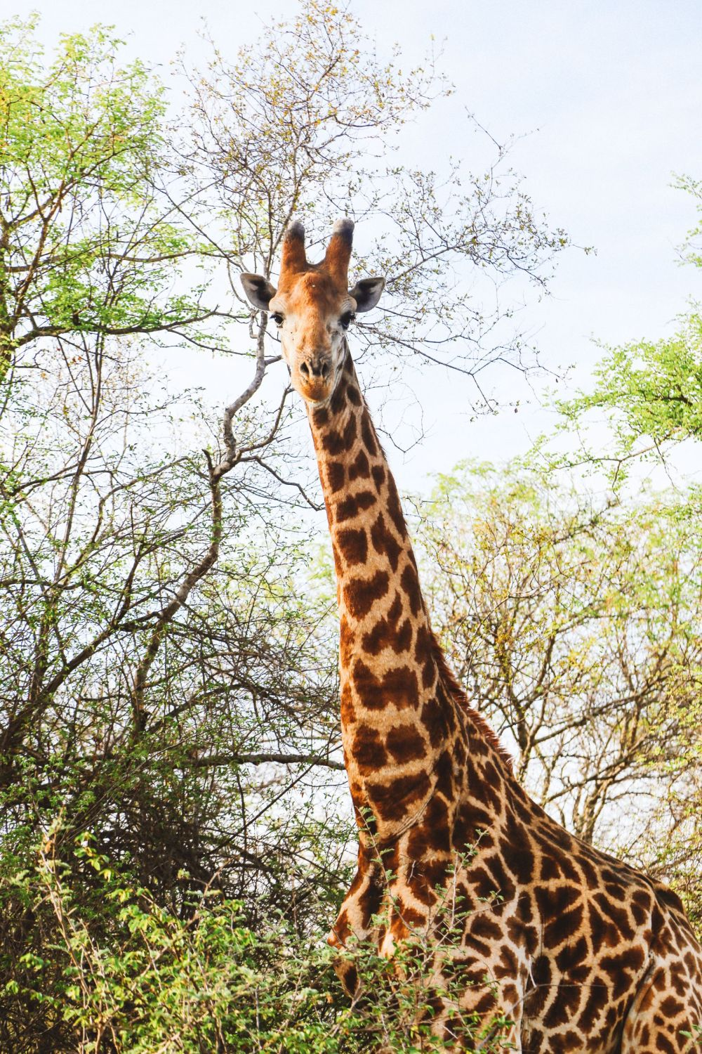 Midnight Lions, Skittish Giraffes And The Deadliest Of The Safari Big 5 In South Africa (4)