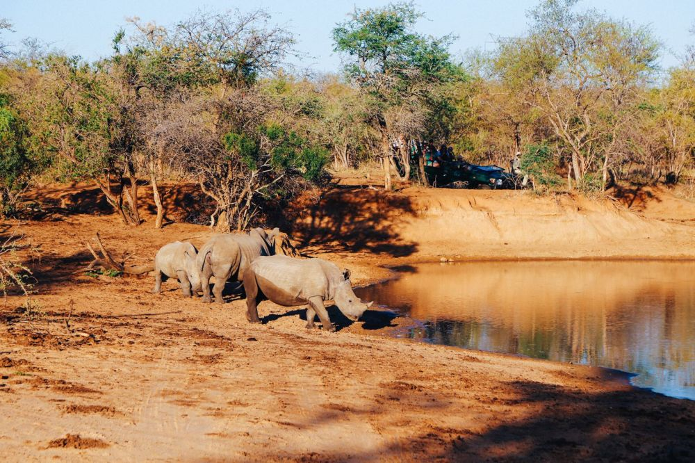 Midnight Lions, Skittish Giraffes And The Deadliest Of The Safari Big 5 In South Africa (48)