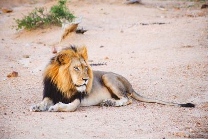 Midnight Lions, Skittish Giraffes And The Deadliest Of The Safari Big 5 In South Africa (50)