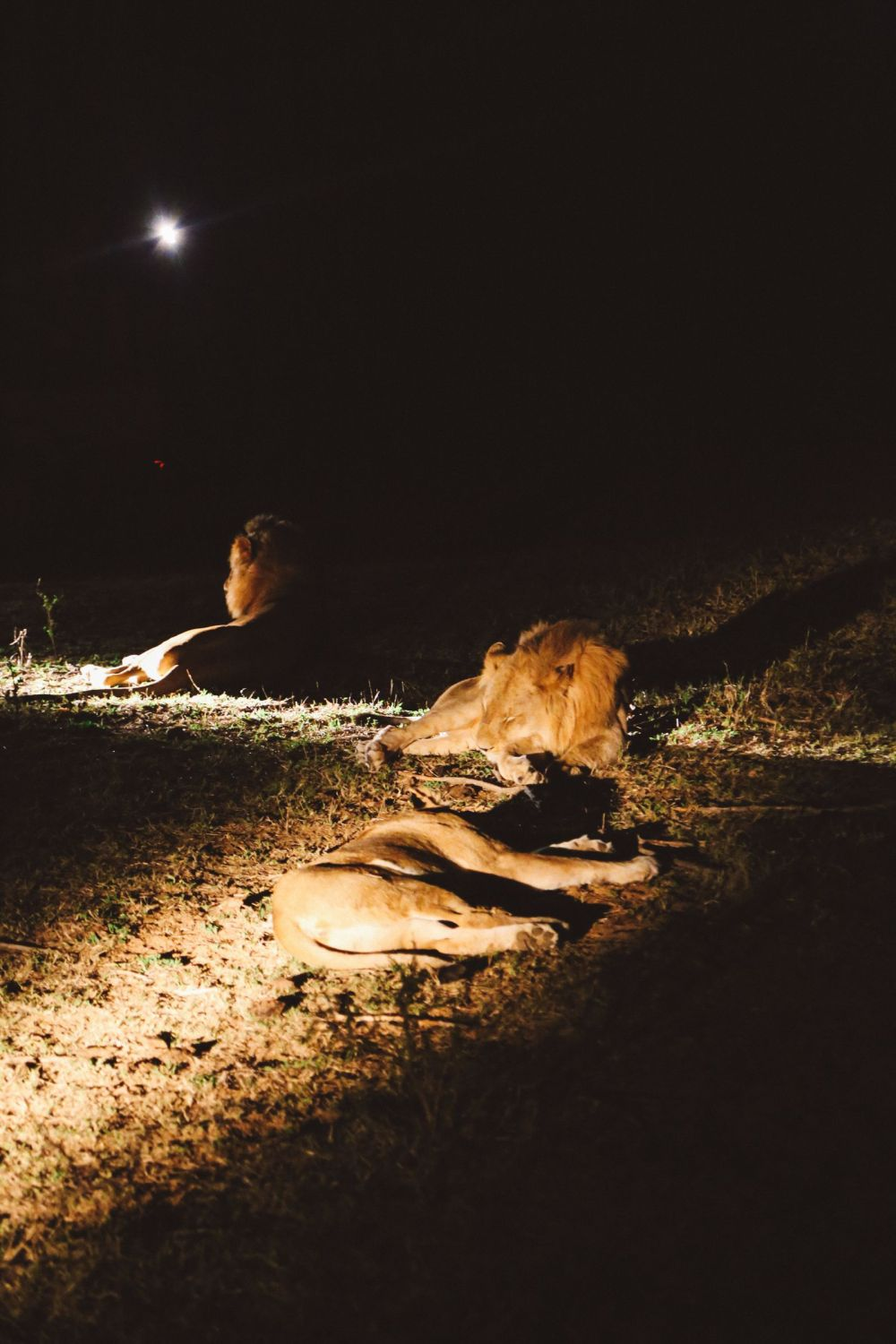 Midnight Lions, Skittish Giraffes And The Deadliest Of The Safari Big 5 In South Africa (57)