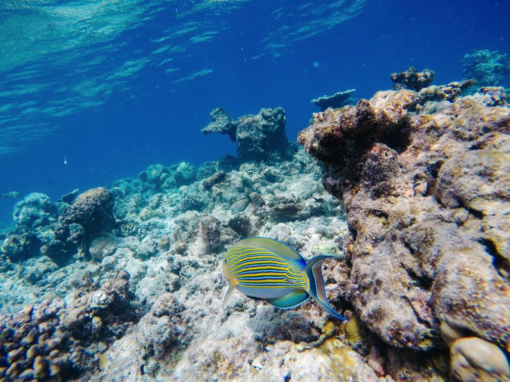 Reef Explorers In The Maldives (12)