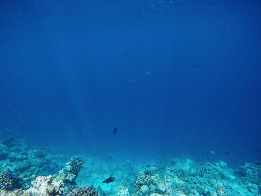 Reef Explorers In The Maldives (14)