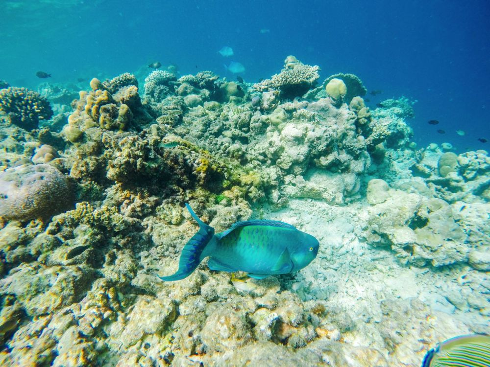 Reef Explorers In The Maldives (15)