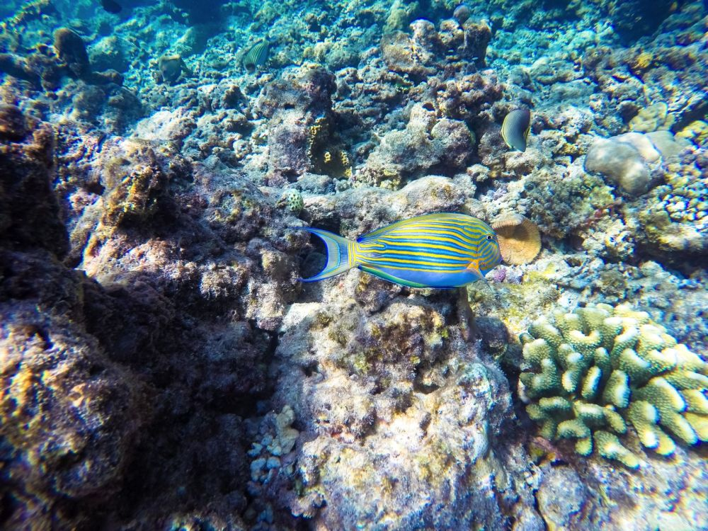 Reef Explorers In The Maldives (22)