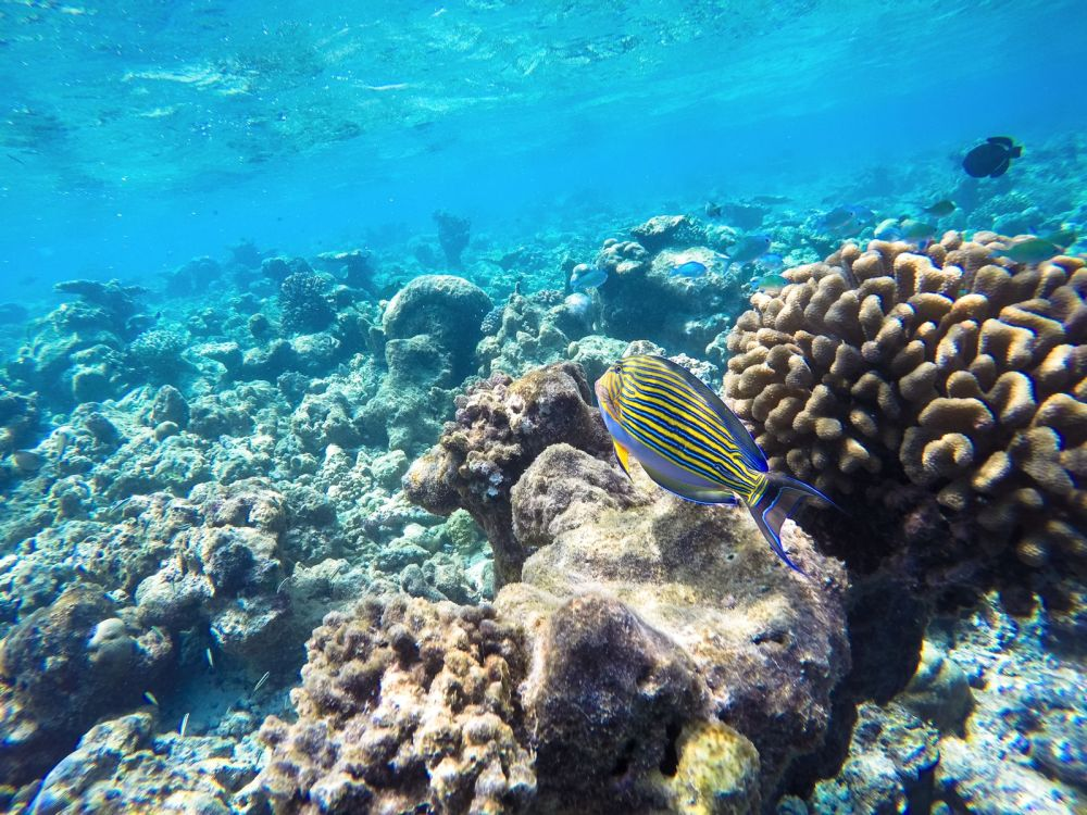 Reef Explorers In The Maldives (24)