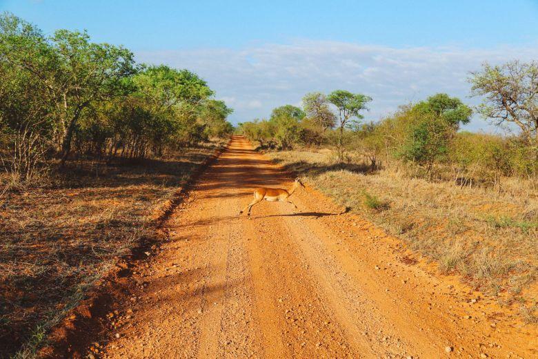 Sunrise Till Sunset - A 24 Hour South African Safari Diary (6)