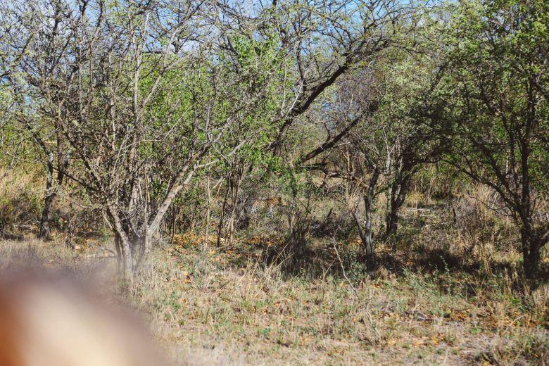 Sunrise Till Sunset - A 24 Hour South African Safari Diary (10)
