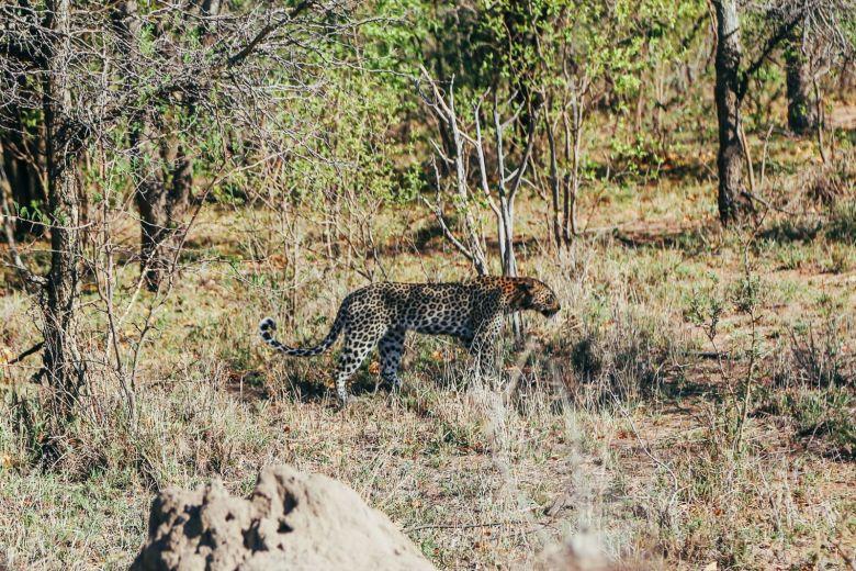 Sunrise Till Sunset - A 24 Hour South African Safari Diary (11)