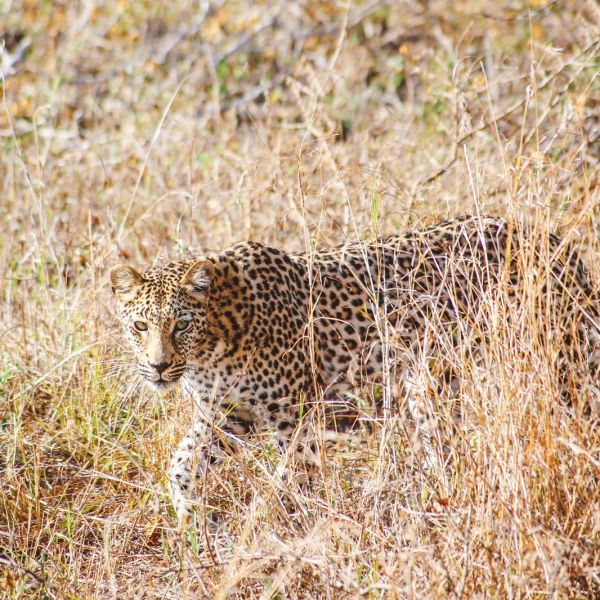 Sunrise Till Sunset - A 24 Hour South African Safari Diary (13)