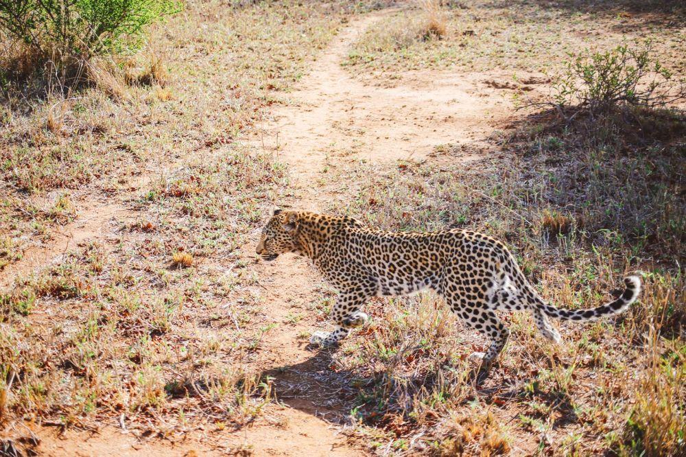 Sunrise Till Sunset - A 24 Hour South African Safari Diary (14)