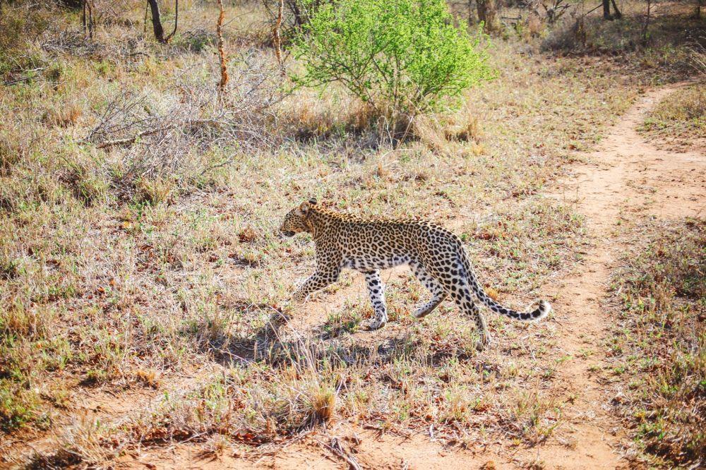 Sunrise Till Sunset - A 24 Hour South African Safari Diary (15)