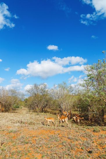 Sunrise Till Sunset - A 24 Hour South African Safari Diary (16)