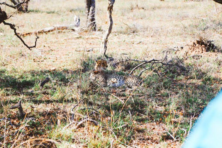 Sunrise Till Sunset - A 24 Hour South African Safari Diary (24)