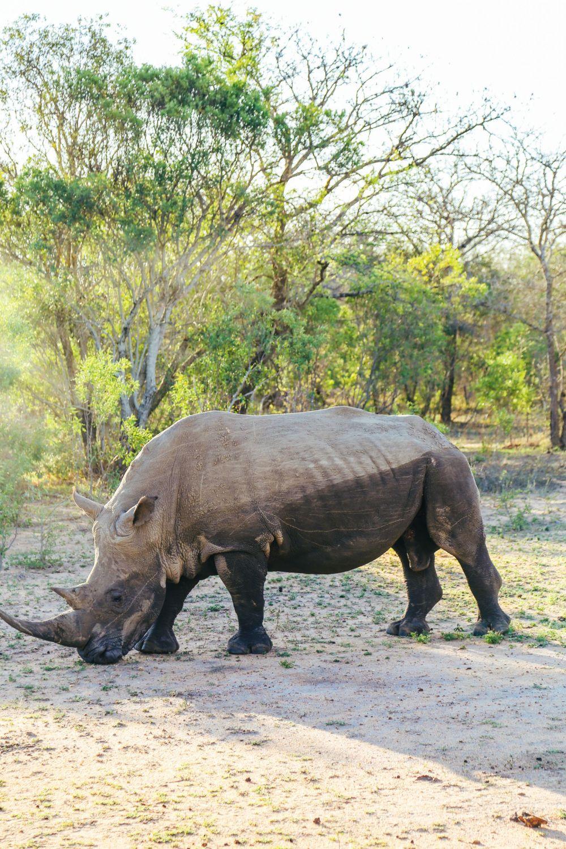 Sunrise Till Sunset - A 24 Hour South African Safari Diary (47)