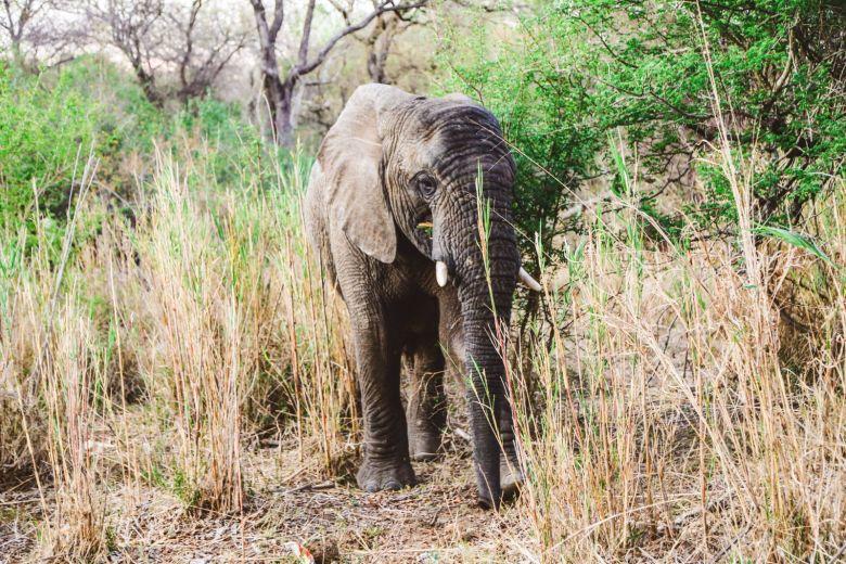 Sunrise Till Sunset - A 24 Hour South African Safari Diary (53)