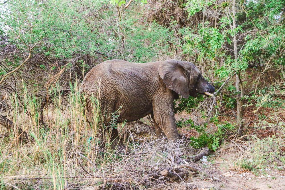 Sunrise Till Sunset - A 24 Hour South African Safari Diary (56)